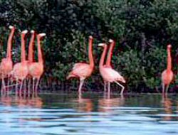 Inagua - Bahamas